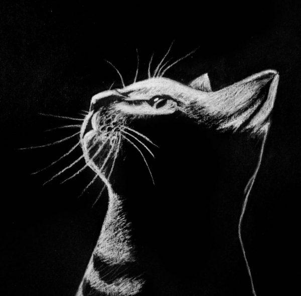 Lucid Dreams cat